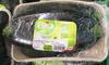 Courgettes verte - Produit